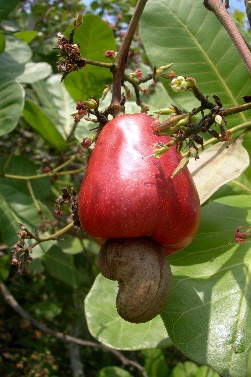 Smetana z kešu ořechů